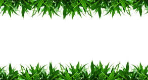 Bamboo leaves frame background isolated Royalty Free Stock Images
