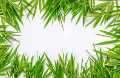 Bamboo leaves frame Stock Photos