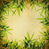 Bamboo Leaves Frame On Grunge Paper Stock Image