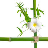 Bamboo leaves with frangipani flower frame made of stems is isol Stock Photos