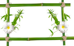 Bamboo leaves with frangipani flower frame made of stems is isol Stock Images
