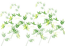 Bamboo leaves ,Green bamboo vector illustration white background Stock Images