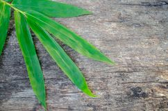 Bamboo green leaves on old wood background. Bamboo leaves green on an old wood background, used as a background Stock Photography
