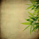 Bamboo leaves on grunge Royalty Free Stock Photography