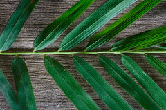 Bamboo leaves on grunge wood background texture with shadow Stock Images