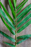 Bamboo leaves on grunge wood background texture with shadow Royalty Free Stock Photography
