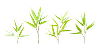 Bamboo Leaves Isolated On White Royalty Free Stock Image