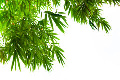 Bamboo leaves isolated on white Royalty Free Stock Images