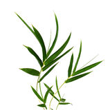 Bamboo- leaves. Bamboo leaves isolated on white Stock Photos