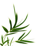 Bamboo- leaves. Bamboo leaves isolated on white Stock Image