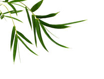 Bamboo- leaves. Bamboo leaves isolated on white Royalty Free Stock Images