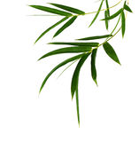 Bamboo leaves. Isolated on white royalty free stock images