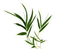Bamboo leaves. Isolated on white stock images