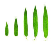 Bamboo leaves isolated Stock Images