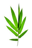 Bamboo leaves isolated Royalty Free Stock Photos