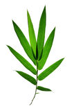 Bamboo leaves isolated Royalty Free Stock Photography
