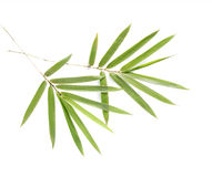 Bamboo leaves Stock Images