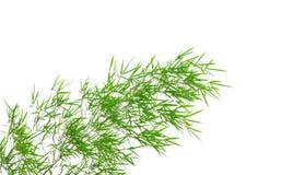 Bamboo leaves isolated on white background Stock Photo