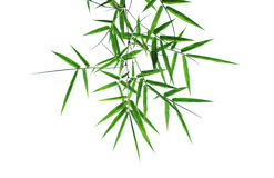 Bamboo leaves isolated Stock Photos