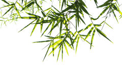 Bamboo leaves isolated Stock Photography