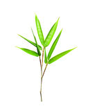 Bamboo leaves isolated on white Royalty Free Stock Photo
