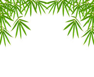 Bamboo leaves isolated on white background, clipping path includ Stock Photography