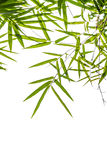 Bamboo leaves isolated on white background, clipping path includ Royalty Free Stock Photos