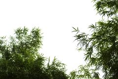 Bamboo leaves isolated on white background stock photography