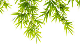 Bamboo leaves isolated on white background Stock Images