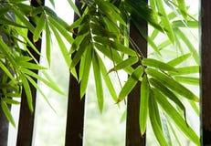 Bamboo leaves near window stock photo