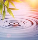 Bamboo leaves over water stock image