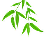 Bamboo leaves pattern with space for your text Royalty Free Stock Photo