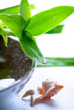 Bamboo leaves and shells in water drops Stock Photography