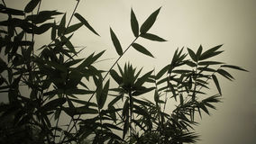 Bamboo leaves. In silhouette style use as background Royalty Free Stock Images