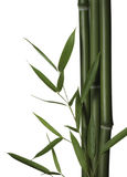 Bamboo leaves and stalks. Isolated on white background Royalty Free Stock Photo