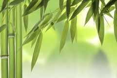 Bamboo leaves and stalks Stock Photography