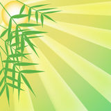 Bamboo leaves and sun rays Royalty Free Stock Images