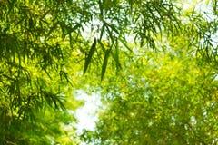 Bamboo leaves on sunshine Stock Photos