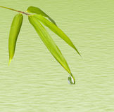 Bamboo Leaves and water drop Royalty Free Stock Photo