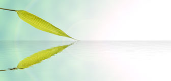 Bamboo leaves and water reflection. For zen background Royalty Free Stock Images