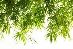 Bamboo leaves. On white background royalty free stock photo