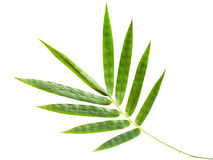 Bamboo leaves. On the white background royalty free stock image