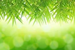ฺBamboo liście na zielonym abstrakcjonistycznym tle Zdjęcia Stock