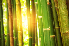 Bamboo with light on the day. Royalty Free Stock Photography