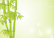 Bamboo in light green background Royalty Free Stock Photo