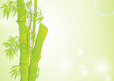 Bamboo in light green background Stock Images