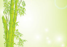 Bamboo in light green background Royalty Free Stock Image