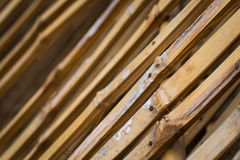 Bamboo is line Stock Images