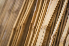 Bamboo is line Royalty Free Stock Photo