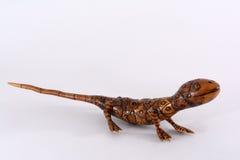 Bamboo Lizard Stock Images